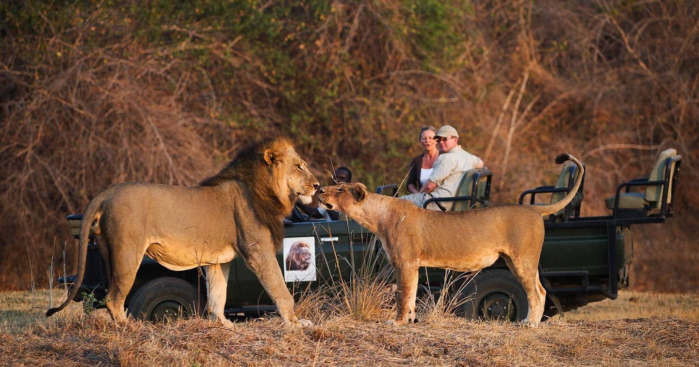 safari destinations in Africa
