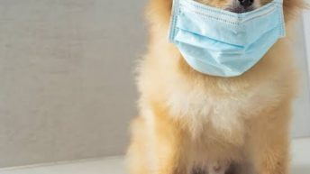 Covid-19: Can pets, Animals contract the Coronavirus